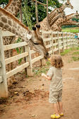 Little boy feeding a giraffe at the zoo at the day time. — Stock Photo