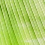 Banana leaf. — Stock Photo #58632921