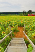 农田的视图. — 图库照片