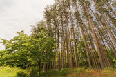 Trees in forest in North America — Stock Photo