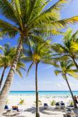 Beach with palm trees. — Stock Photo