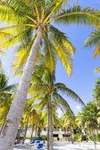 Beautiful Caribbean beach. — Stock Photo