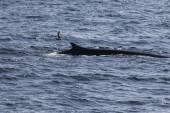 Whale on  coast of  ocean — Stock Photo