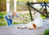 Toddler playing with big dog   — Stock Photo