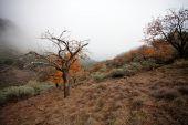 Foggy landscape, Gran Canaria — Stock Photo