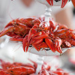 Party with lots of crayfish — Stock Photo #73847061