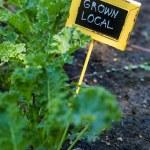 Urban garden sign — Stock Photo #52542127