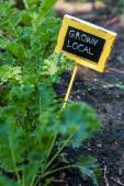 Urban garden sign — Foto Stock