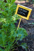 Urban garden sign — Stock Photo