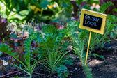 Urban garden — Stock Photo