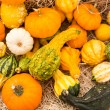 Miniature Pumpkins — Stock Photo #54085261