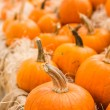 Miniature Pumpkins — Stock Photo #54085267
