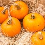 Miniature Pumpkins — Stock Photo #54085273