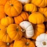 Miniature pumpkins — Stock Photo #54085331
