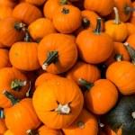 Miniature pumpkins — Stock Photo #54085369