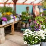 ������, ������: Plants in pots