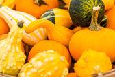 Calabazas naranjas — Foto de Stock