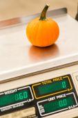 Small orange Pumpkins — Stock Photo