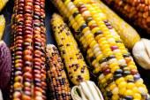 Flint corn — Stock Photo