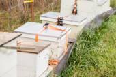 Hives in autumnal apple garden — Stock Photo