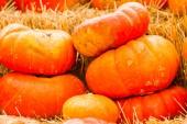 Pumpkin patch — Foto Stock