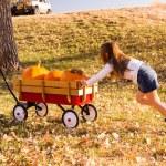 Girl helping to take large orange pumpkins home — Stock Photo #56394295