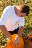 Man Carving big orange pumpkins — Stock Photo