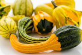 Fresh Pumpkins — Stock Photo