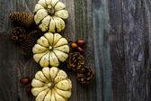 Healthy organic Pumpkins — Foto de Stock