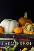 Fresh organic pumpkins — Stock Photo