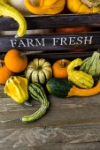 Fresh organic pumpkins — Foto de Stock