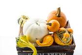 Fresh organic pumpkins — Stock Photo