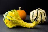 Miniature gourd — Φωτογραφία Αρχείου