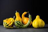 Miniature gourd — Stockfoto