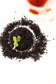Chocolate mint tea — Foto Stock