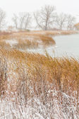 Wildlife refuge area after fresh snow — Stock Photo