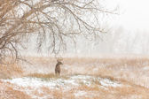 Deer at wildlife refuge area — Stock Photo