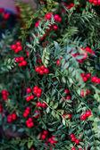 Da vicino della corona di Natale — Foto Stock