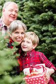 Family at Christmas tree farm — ストック写真