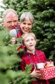 Family at Christmas tree farm — Fotografia Stock
