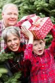 Rodina na vánoční stromeček farmy — Stock fotografie