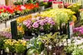 Garden center view — Stock Photo