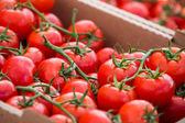 Pomidory na rynku rolników na Main Street w Parker — Zdjęcie stockowe