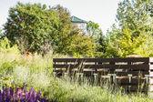 Urban vegetable garden. — Stock Photo