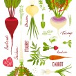 Root Vegetables with Greens Signs and Symbols Design Collection — Stock Vector #56651759