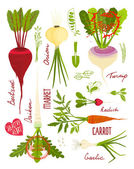 Root Vegetables with Greens Signs and Symbols Design Collection — Stock Vector