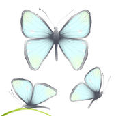 Three Hand Drawn Delicate Blue Butterflies — Stock Vector
