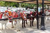 Donkey taxi of Mijas — Стоковое фото