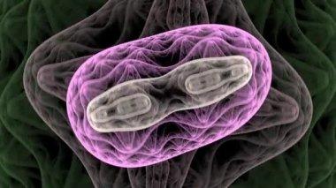Bactéries de fond rendu — Vidéo