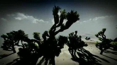 Joshua trees — Stock Video